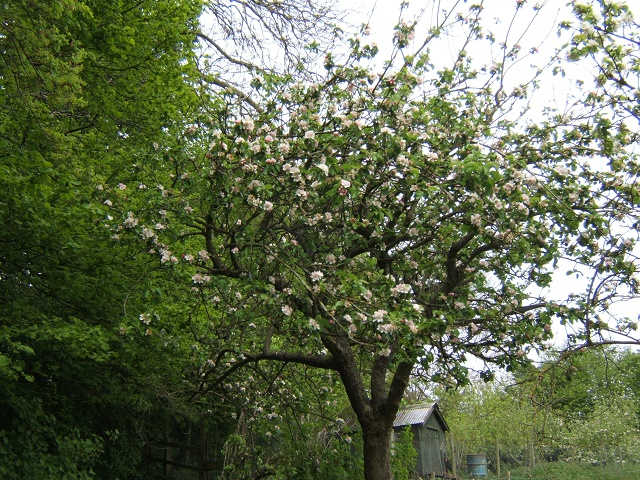 Blossom in May & Hope Bagot Fete