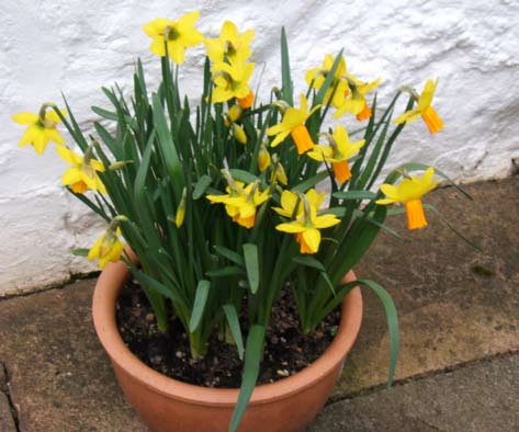 What a difference the DAFFODILS MAKE